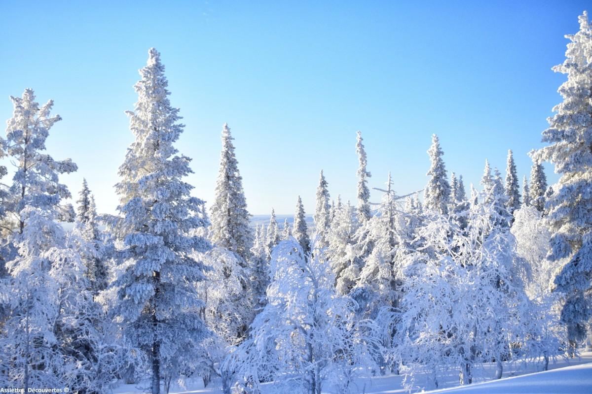 5 raisons de visiter la Laponie finlandaise